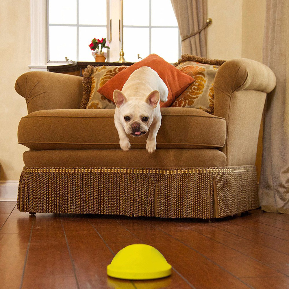 Indoor Gliding Squeaky Dog Toy